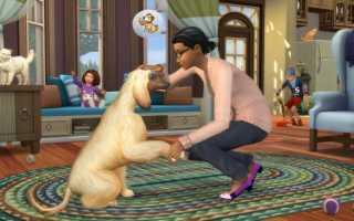 The Sims 4 — Гайд по Ветеринарной клиники