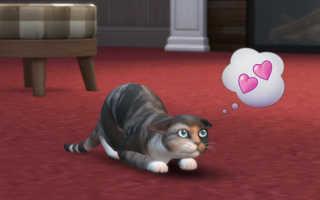 The Sims 4 — Гайд «Кошки и собаки» как дрессировать животных